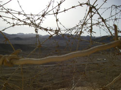 barbed wire - on the border...