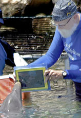 dolphin uses iPad to communicate with humans