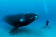 man with a right whale