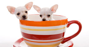 coffee dogs on national coffee day
