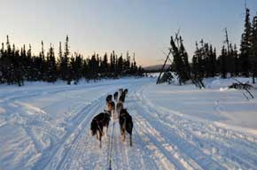Iditarod - new tech for following the race