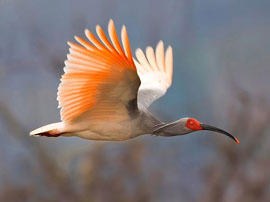 the best rare bird photos of 2011 from the National Geographic