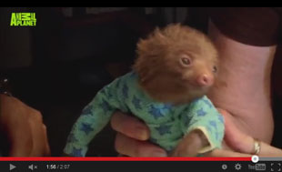 baby sloth wearing PJs