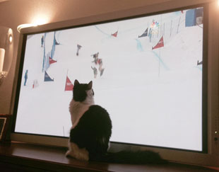 Fluffy watches snowboard cross