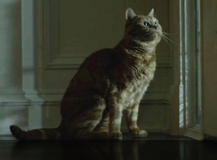 Boris the cat (in Gone Girl)