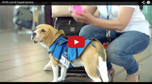 KLM's lost and found Beagle