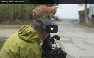 orange kitten befriends photographer