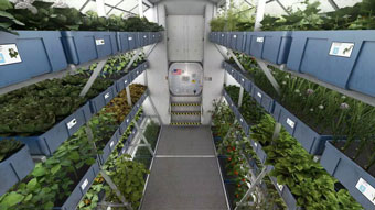 space greens - grown on the space station!