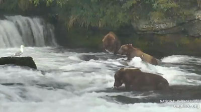 "Katmai National Park ""bear cam"""